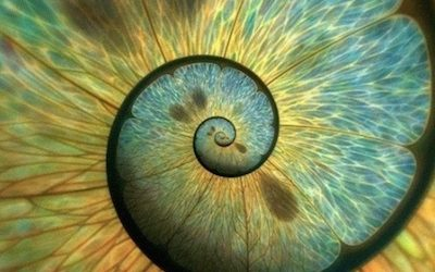 The Spiral of Life